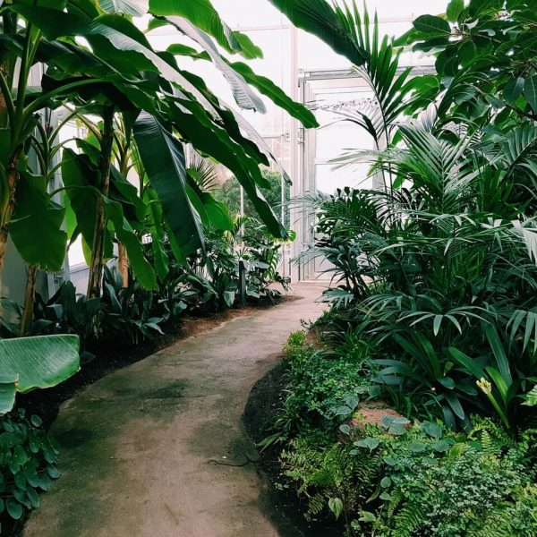 photography-of-pathway-surrounded-by-plants-1.jpg
